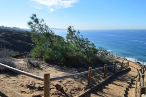 Torrey Pine State Reserve - Walking Trail