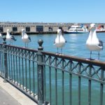San Francisco – A Walk Along the Embarcadero and Fisherman's Wharf