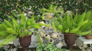 lanis-ferns-and-pots