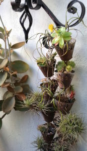 mission-hills-garden-more-potted-tillandsia