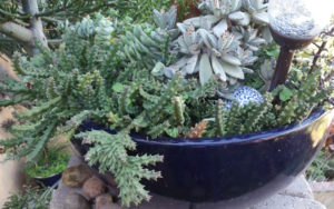 mission-hills-garden-potted-succulents-in-blue-pot