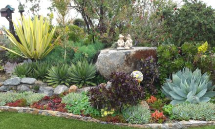 Succulent Magic in Escondido, California