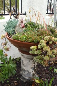Succulents - Planted with Whimsy 5