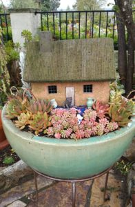 Succulents - Potted with Whimsy
