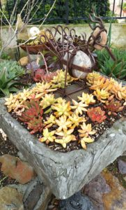 Succulents - Potted with Whimsy 2
