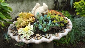 Succulents - Potted with Whimsy 3