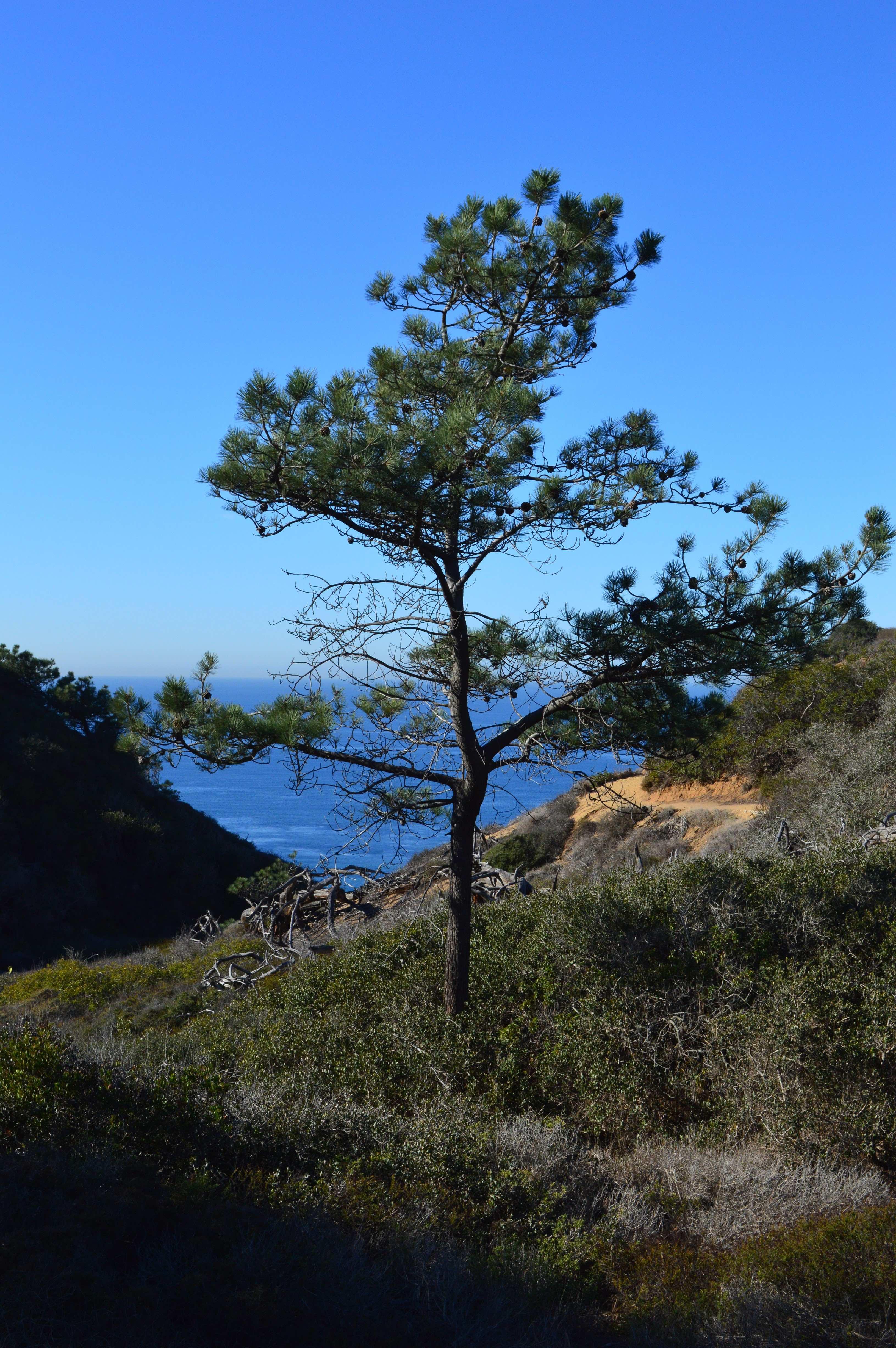 Torrey Pines State Natural Reserve Diane Uke Shares